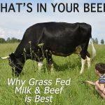 boy feeds cow
